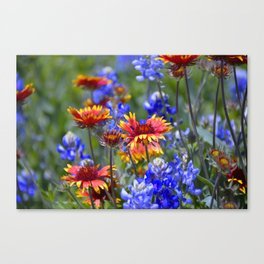 A little color Canvas Print