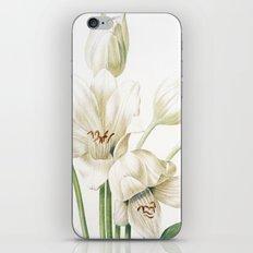 VI. Vintage Flowers Botanical Print by Pierre-Joseph Redouté - Crinum Jagus iPhone & iPod Skin