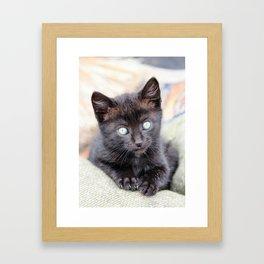 Wide eyed black kitten, resting on burlap sack, looking straight ahead. Framed Art Print