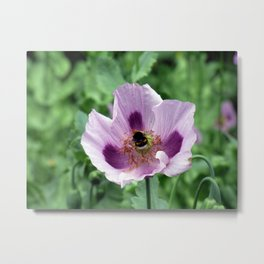 Poppy and Bee Metal Print