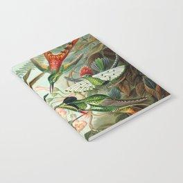 Vintage Hummingbirds Decorative Illustration Notebook