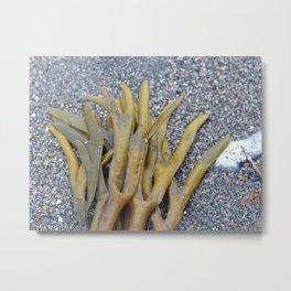 Kelp Bladders Metal Print