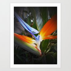 Bird of Paradise- Macro-up close and personal Art Print