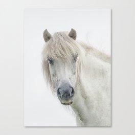 Horse eyes look at you Canvas Print