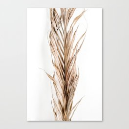Lifestyle Background 37 Canvas Print