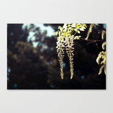 Hanging Flowers Canvas Print