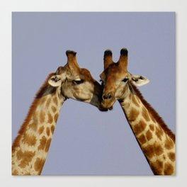 Kissing Giraffes Canvas Print