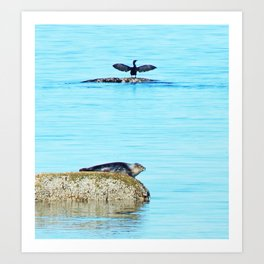 Seal pup and Cormorant getting some Sun  Art Print
