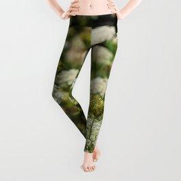 Queen Anne's Lace Leggings