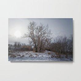 Winter Scrub Metal Print