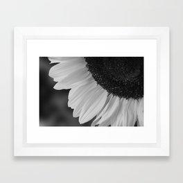 Black and White Sunflower Photography Print Framed Art Print