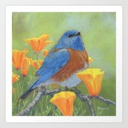 Western Bluebird Art Print