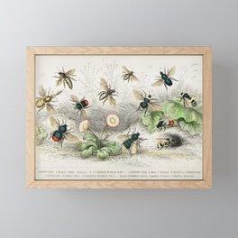 Honey Bee, Worker, Male, Queen, , Female, Moss or Carder Bee, Donovan's Humble Bee, Harris Humble Be Framed Mini Art Print
