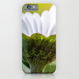 Details of small common Daisy flower macro view from below iPhone Case