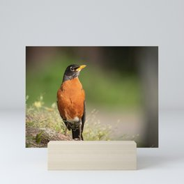 Regal Robin Mini Art Print
