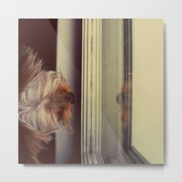 Yorkie Daydreaming Metal Print