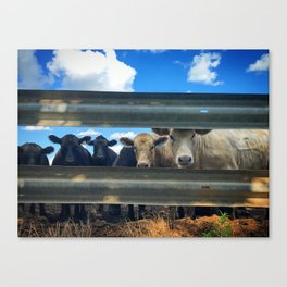 Blue Sky Bovines Canvas Print