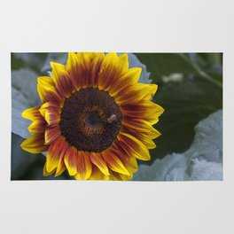 Red Sunflower with Bee Rug