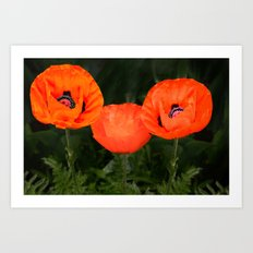 Oriental poppies Art Print