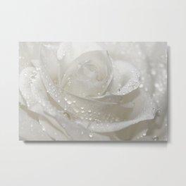 Rose white 0115 Metal Print