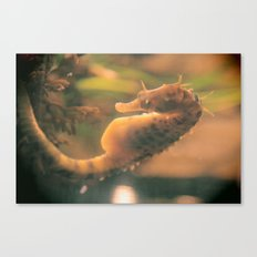 Sea horse Canvas Print