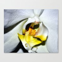 orchid Canvas Prints featuring orchid by  Agostino Lo Coco