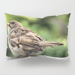 Little Feather Tasting Pillow Sham