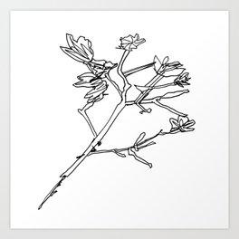Crepe Myrtle 1 Art Print