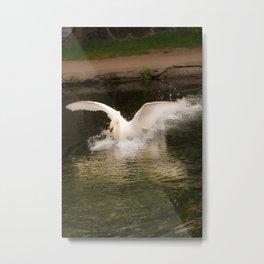 Angry Swan Metal Print
