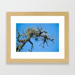 Treehuggers Framed Art Print