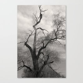 Haunting Canvas Print