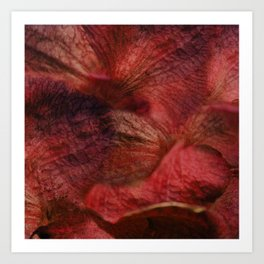 Red Hot Orchids Art Print