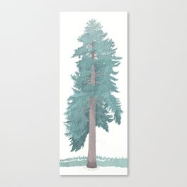 Giant Blue Spruce Canvas Print