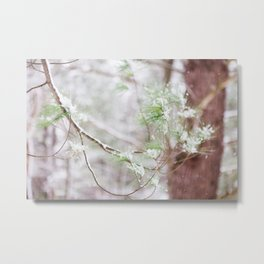 Woodland Winter Greens - Nature Photography Metal Print