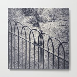 The Lonely Squirrel Metal Print