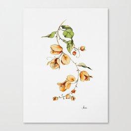 Orange Bougainvillea Illustration Canvas Print