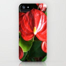 Red Flowers Anthurium Genus iPhone Case