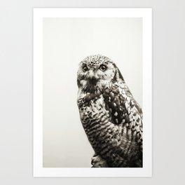 Snowy Owl   Fig. 02 Art Print