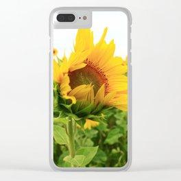 Sonnenblumen 4 Clear iPhone Case