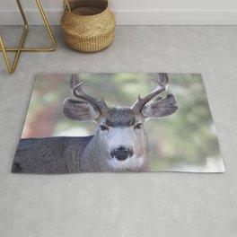 Watercolor Deer, Mule 05, RMNP, Squinter Rug