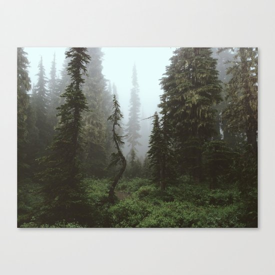Rainier Forest Canvas Print