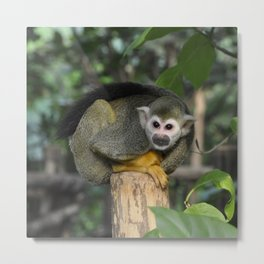 Cute Monkey Metal Print