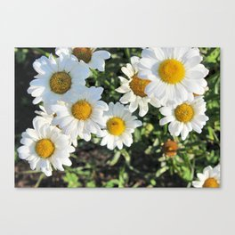 Your My Flower Canvas Print
