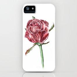 Burgundy rose iPhone Case