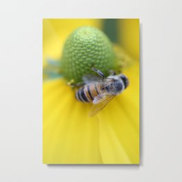 Honeybee on Yellow Metal Print