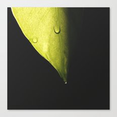 Leaf, water droplets & sunlight Canvas Print