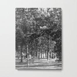 Black-and-White Woods Metal Print