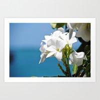 Flower in the Florida Keys Art Print