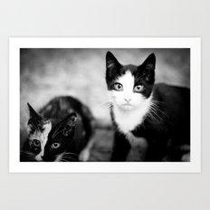 kittys Art Print
