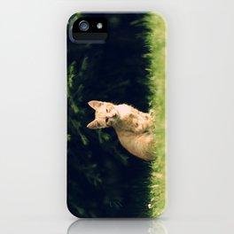 One Eyed Cat iPhone Case